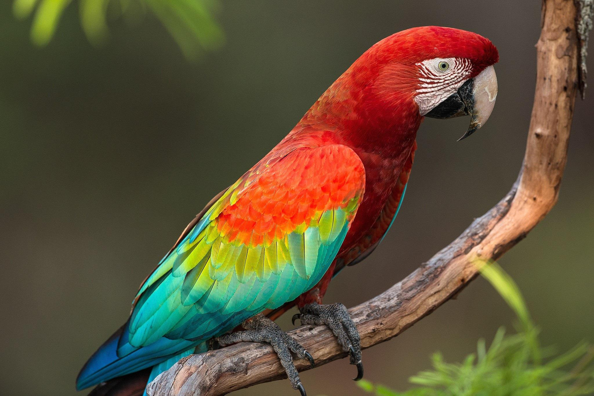 Nice Images Collection: Parrot Desktop Wallpapers