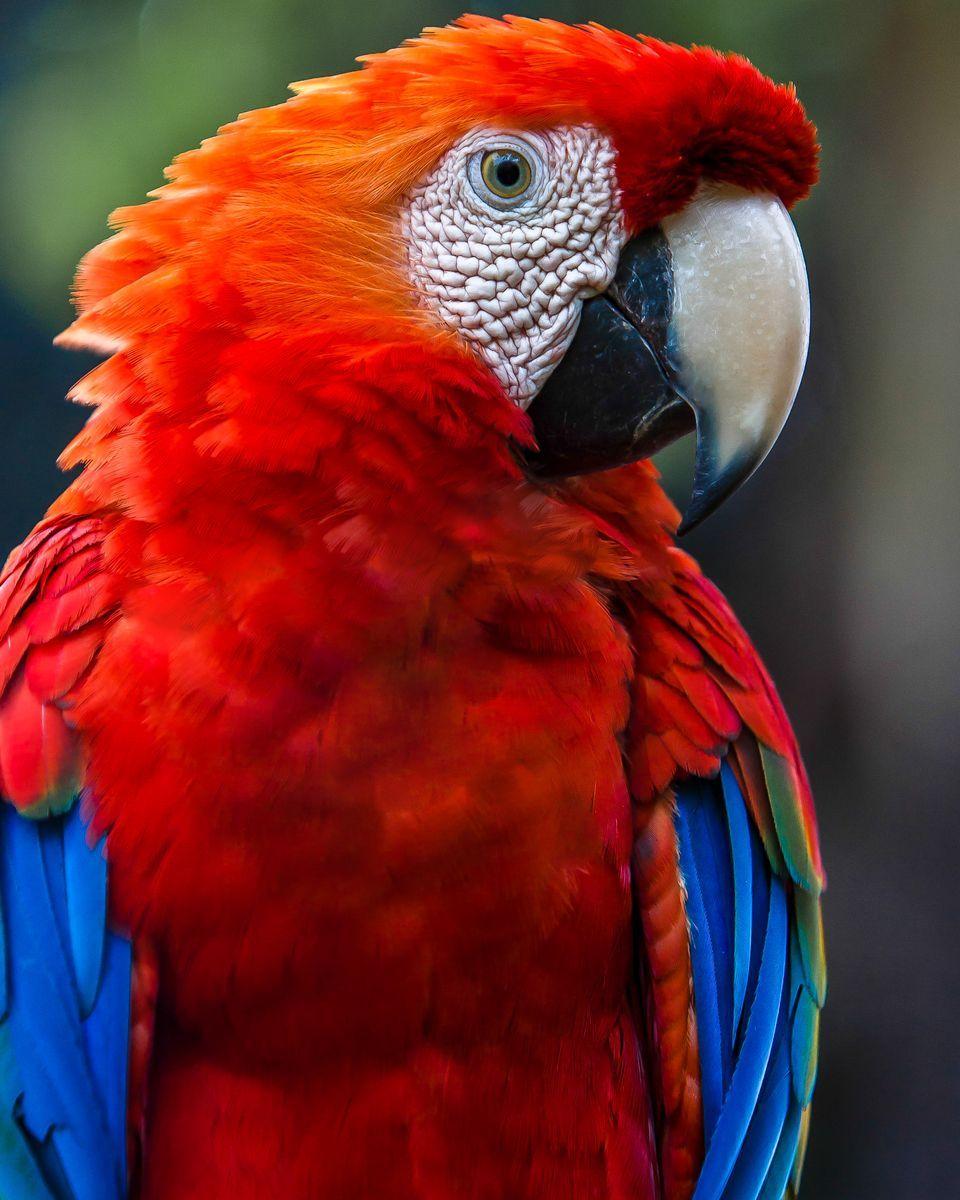 960x1200 > Parrot Wallpapers