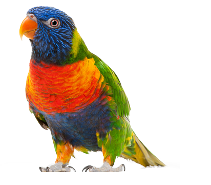 Parrot Backgrounds on Wallpapers Vista
