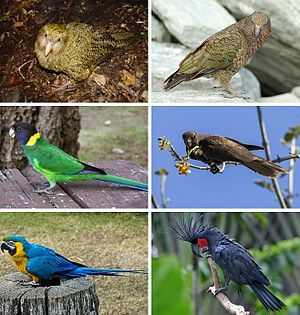 Images of Parrot | 300x315