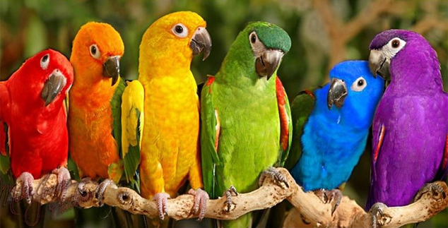 HQ Parrot Wallpapers | File 201.15Kb