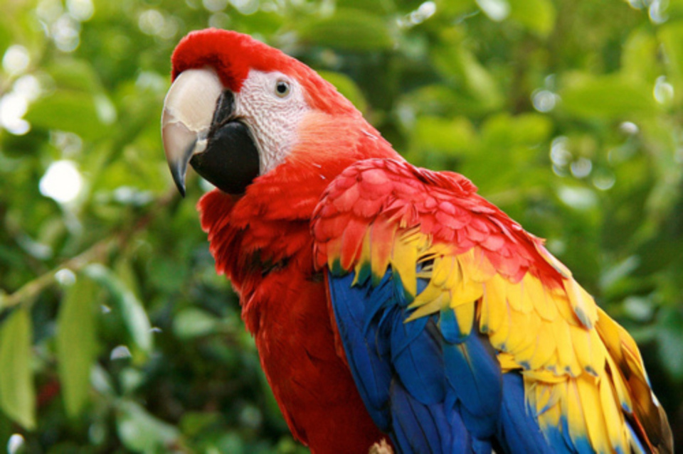 Amazing Parrot Pictures & Backgrounds