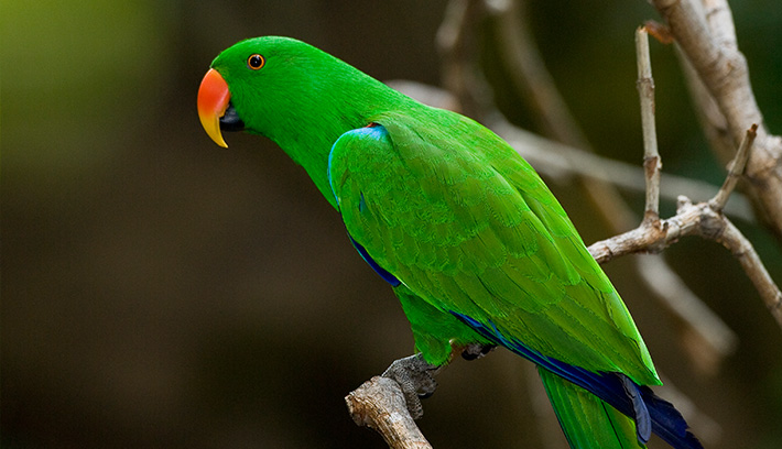 HD Quality Wallpaper | Collection: Animal, 710x408 Parrot