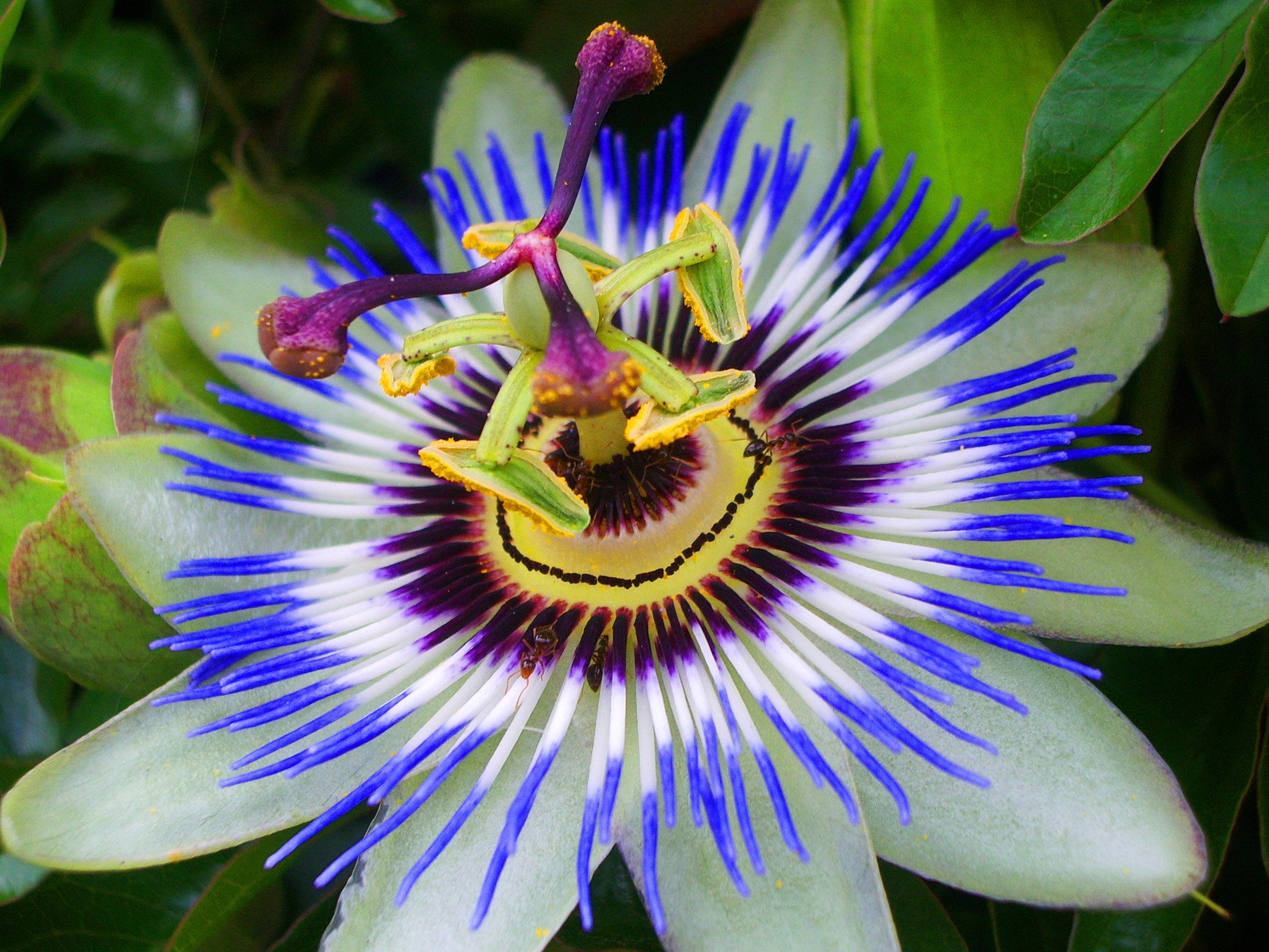 Самые красивые растения мира фото с названиями, флот картинки прикольная