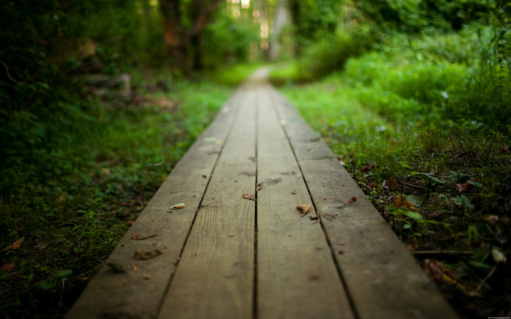 Path Backgrounds, Compatible - PC, Mobile, Gadgets| 2000x1250 px