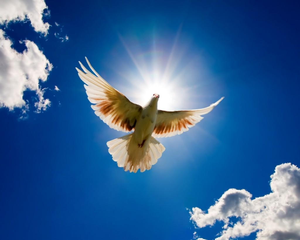 Peace High Quality Background on Wallpapers Vista