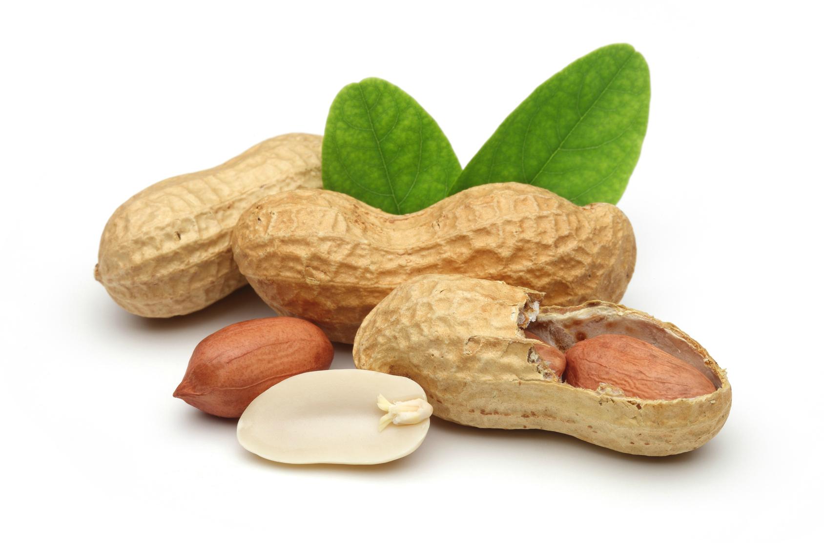 Images of Peanut | 1688x1125
