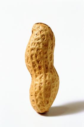 283x425 > Peanut Wallpapers