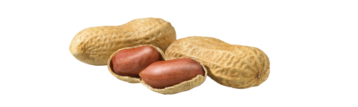 Peanut High Quality Background on Wallpapers Vista