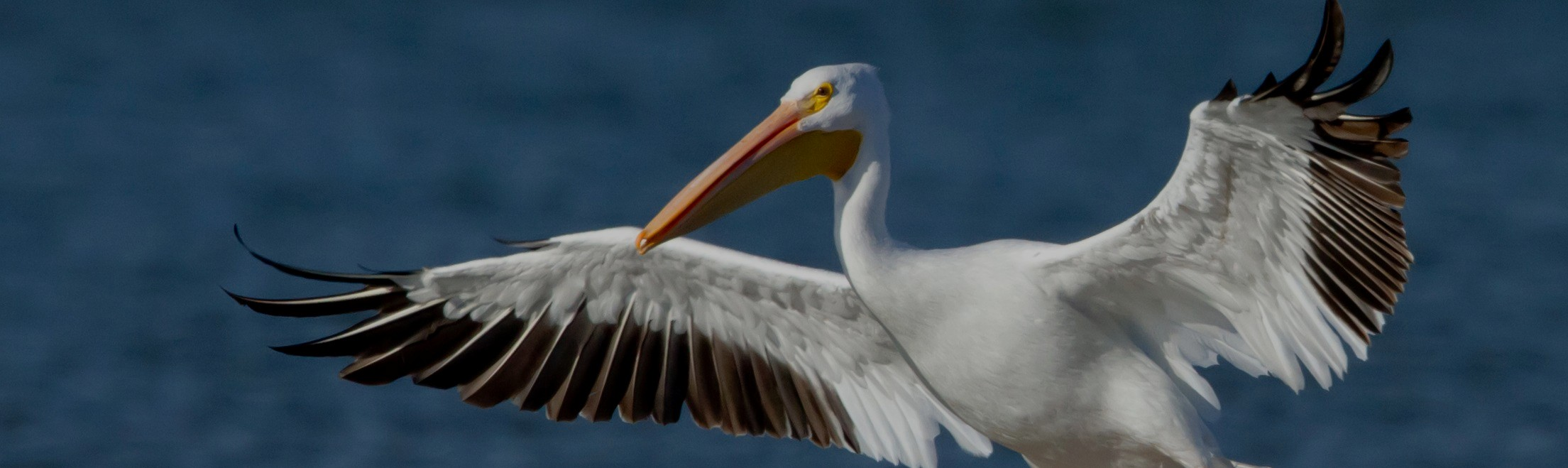2209x659 > Pelican Wallpapers