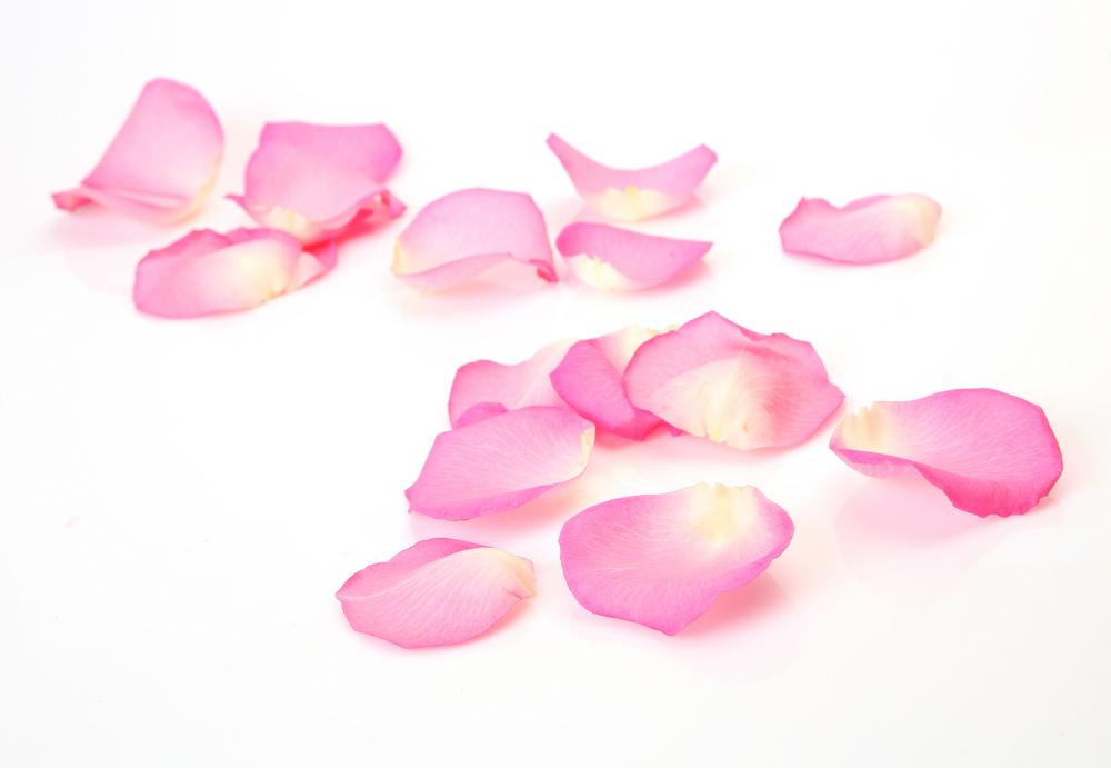 Petals HD wallpapers, Desktop wallpaper - most viewed