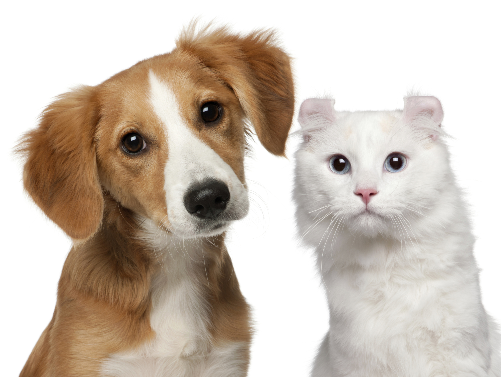 Pets Backgrounds on Wallpapers Vista