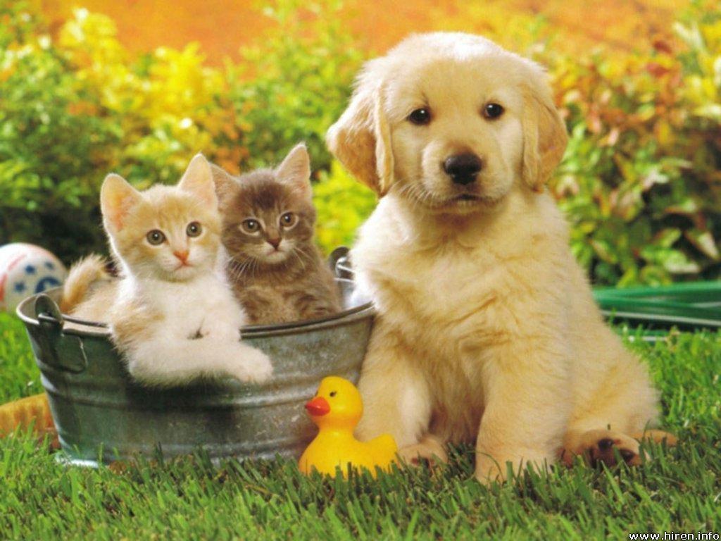 Pets Backgrounds, Compatible - PC, Mobile, Gadgets| 1024x768 px