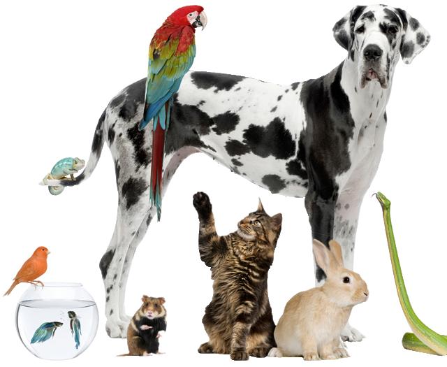 High Resolution Wallpaper | Pets 640x525 px