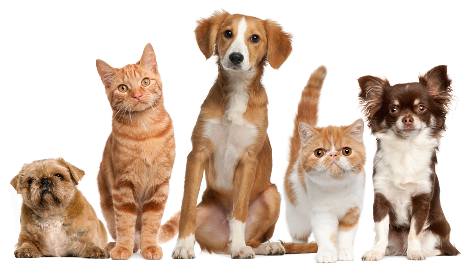 Pets Pics, Animal Collection