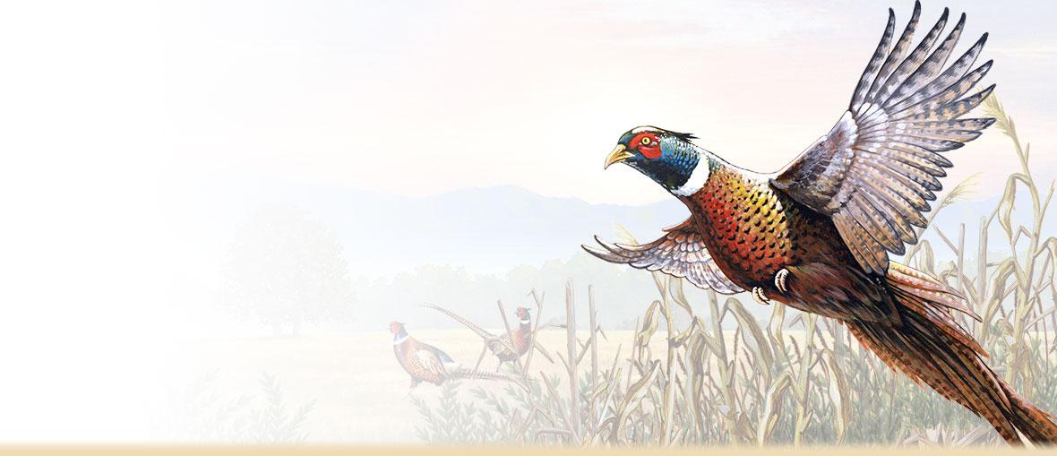 Images of Pheasant | 1180x509