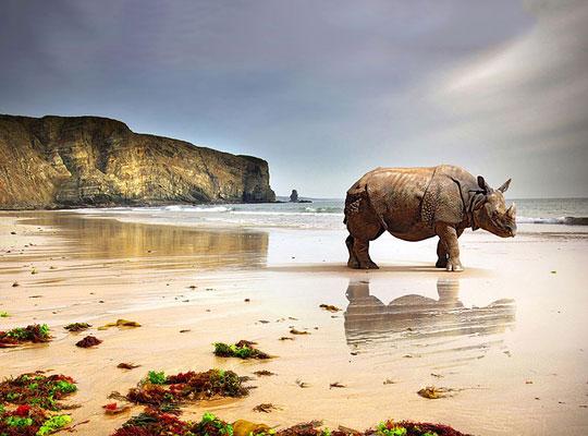 Photoshop Backgrounds, Compatible - PC, Mobile, Gadgets| 540x400 px