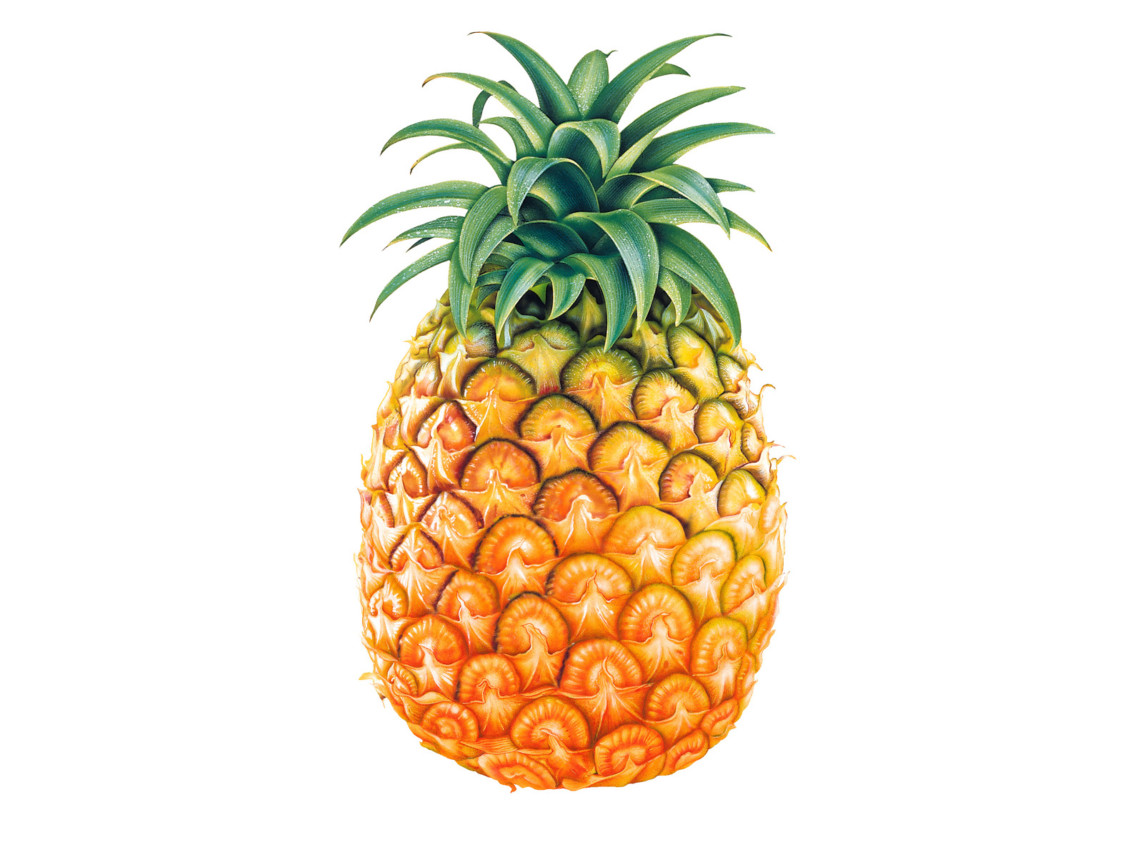 Amazing Pineapple Pictures & Backgrounds