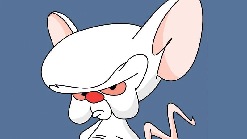 800x451 > Pinky And The Brain Wallpapers