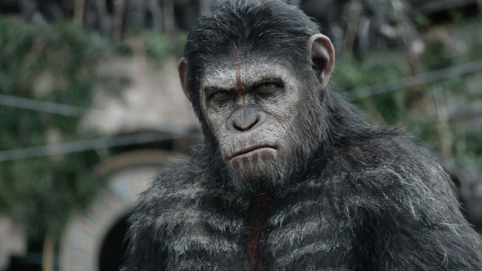 High Resolution Wallpaper | Planet Of The Apes 700x394 px