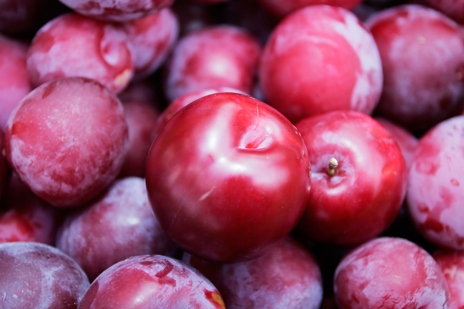 Amazing Plum Pictures & Backgrounds