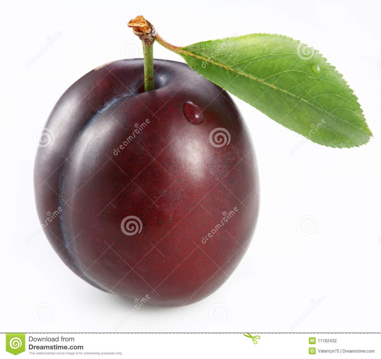 HD Quality Wallpaper   Collection: Food, 1300x1227 Plum