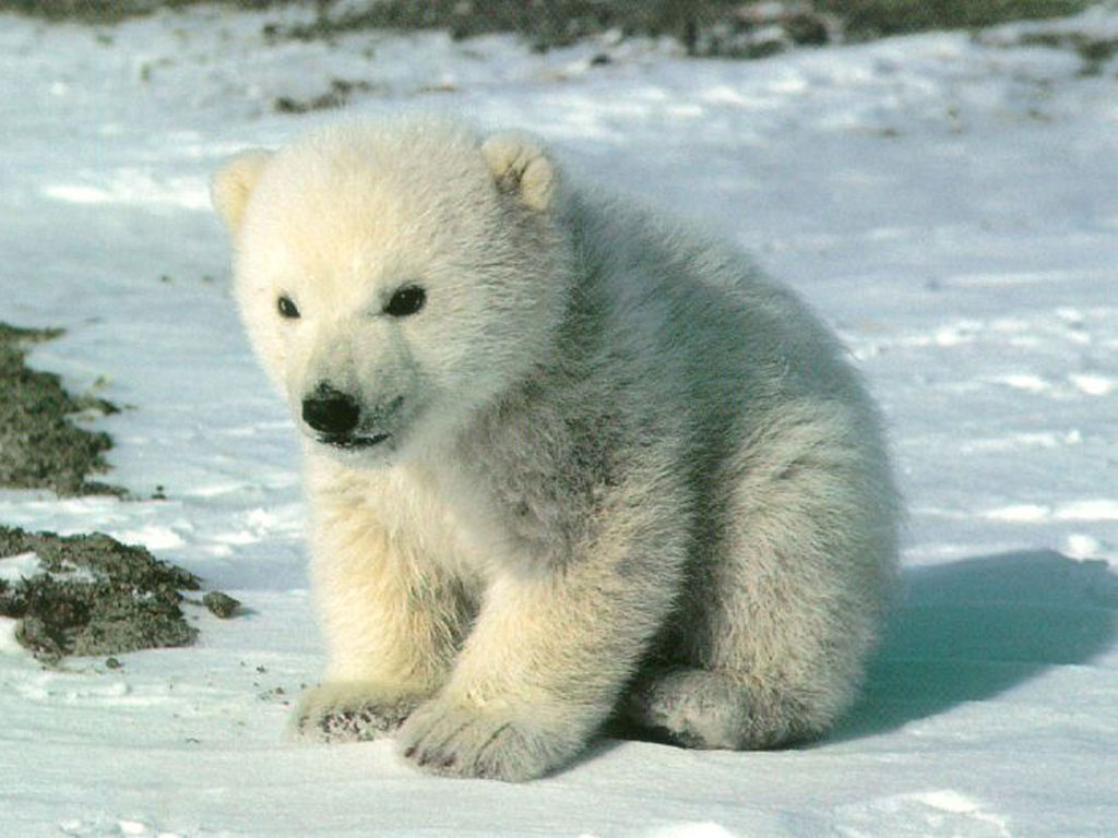 1024x768 > Polar Wallpapers