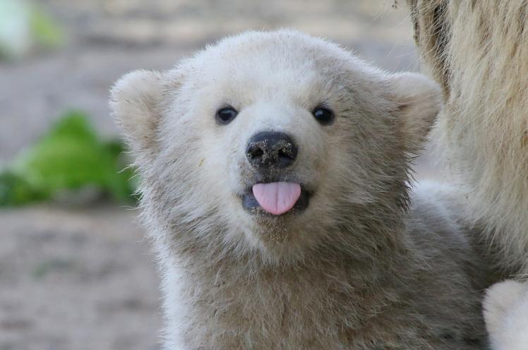 Polar Bear Pics, Animal Collection