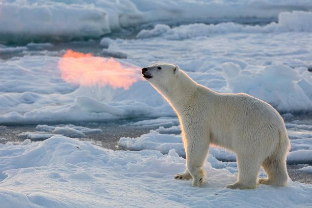 Amazing Polar Pictures & Backgrounds