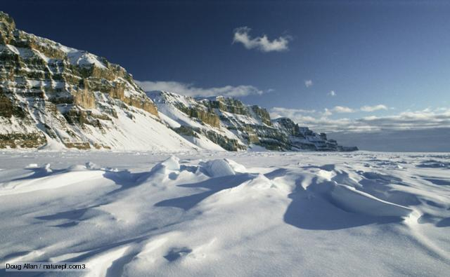 Polar High Quality Background on Wallpapers Vista