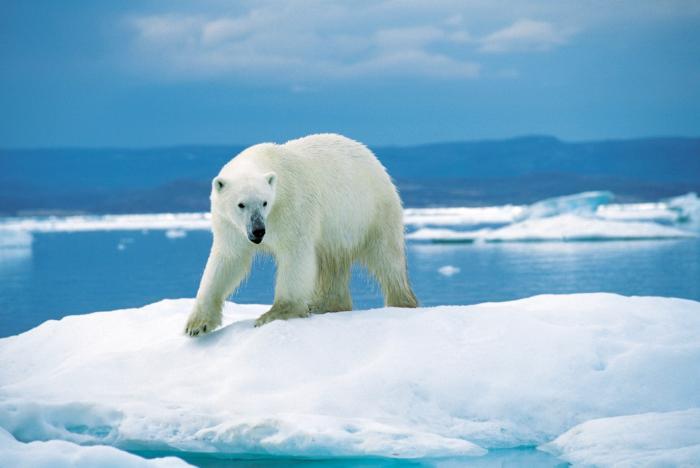 700x468 > Polar Wallpapers