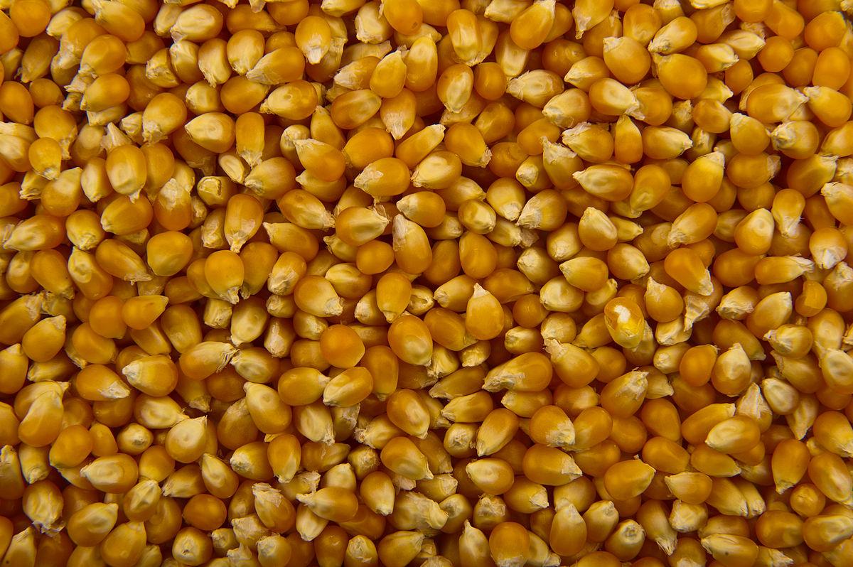 Popcorn Pics, Food Collection