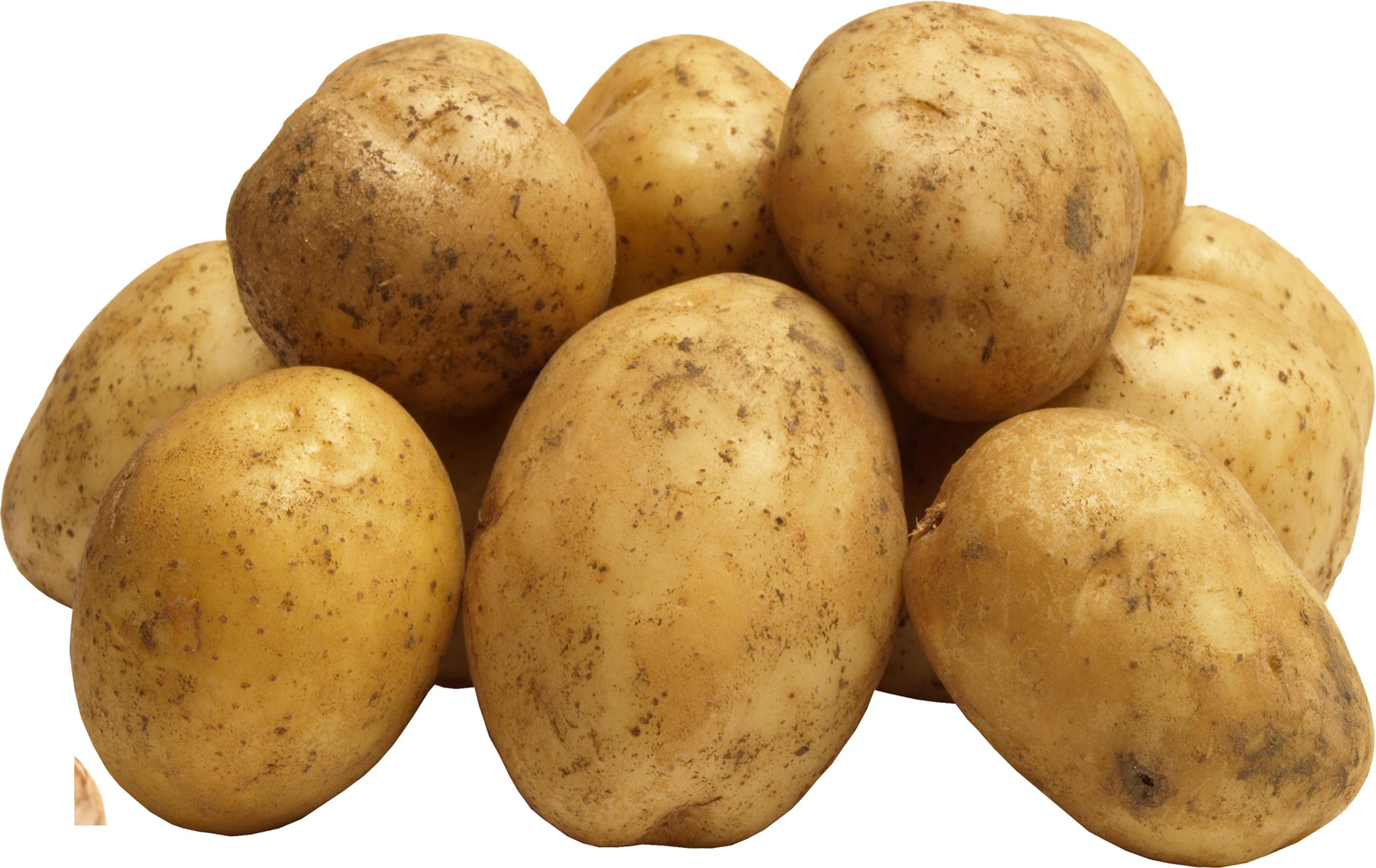 Images of Potato | 2908x1835