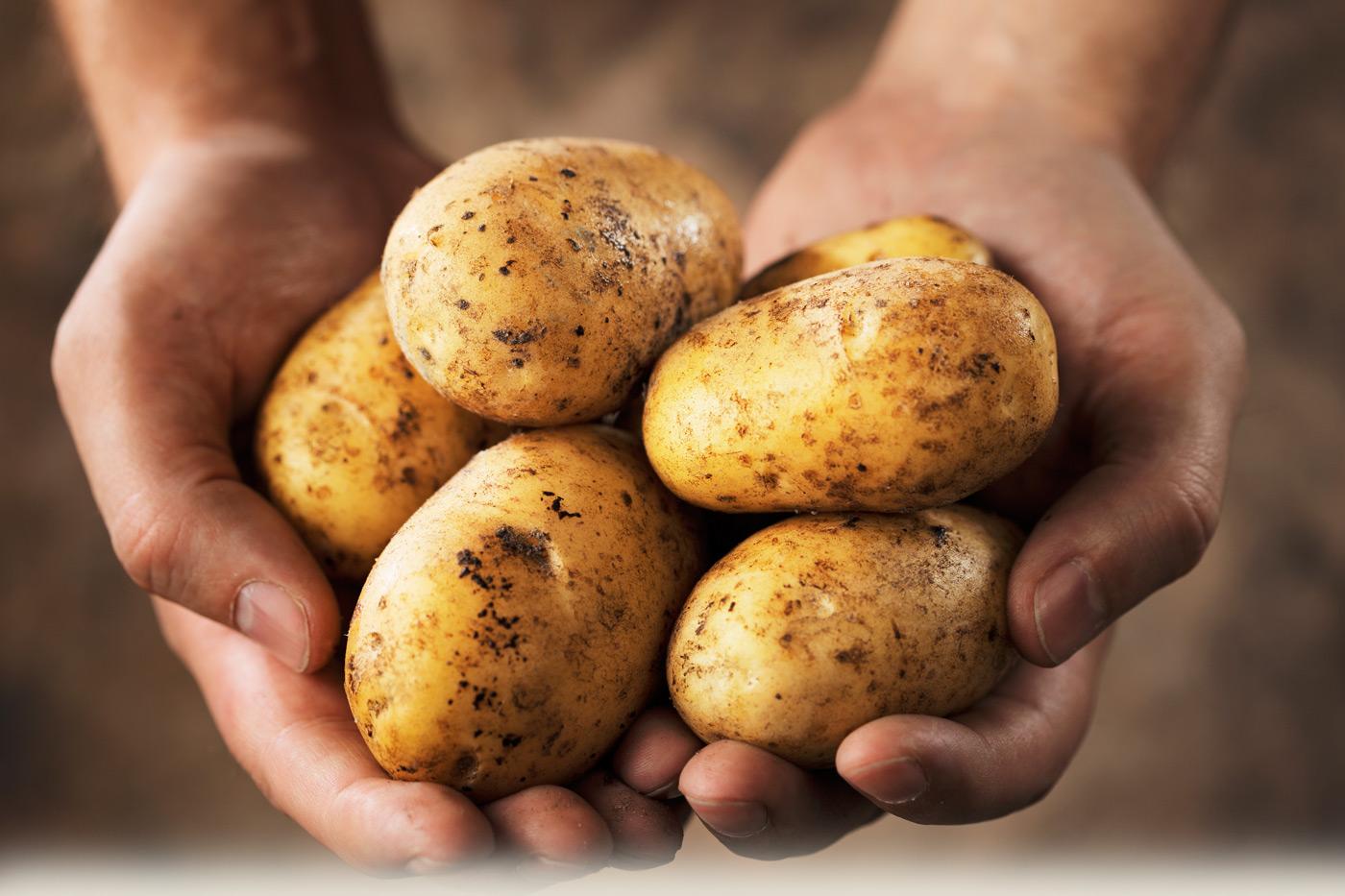 Nice Images Collection: Potato Desktop Wallpapers