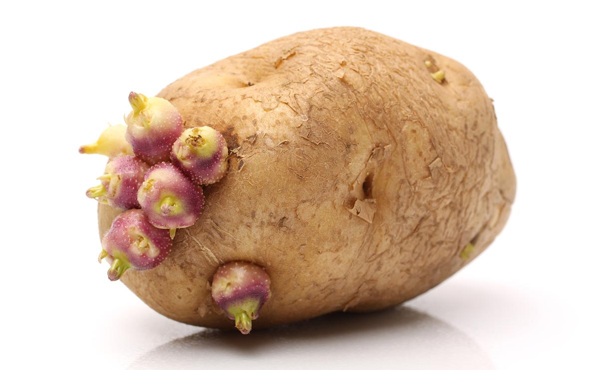 Images of Potato | 1200x742