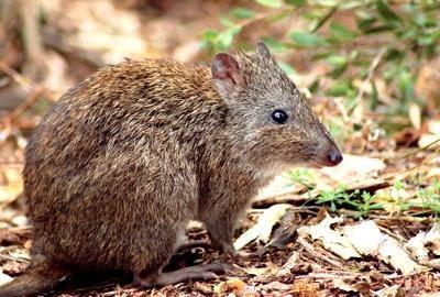 Potoroo Pics, Animal Collection