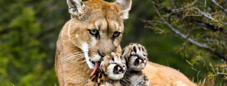 1440x550 > Puma Wallpapers