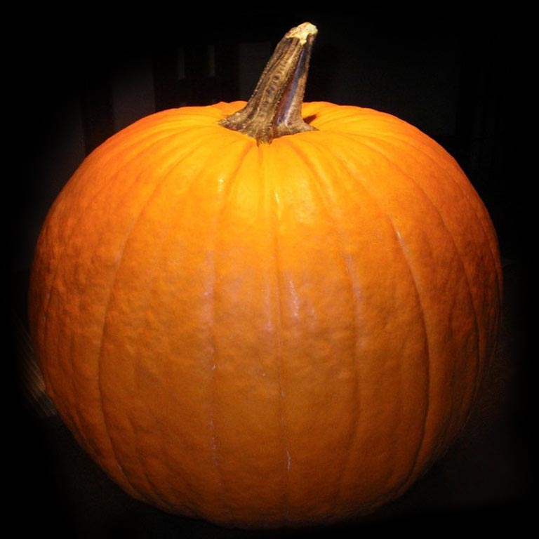 Pumpkin Pics, Food Collection