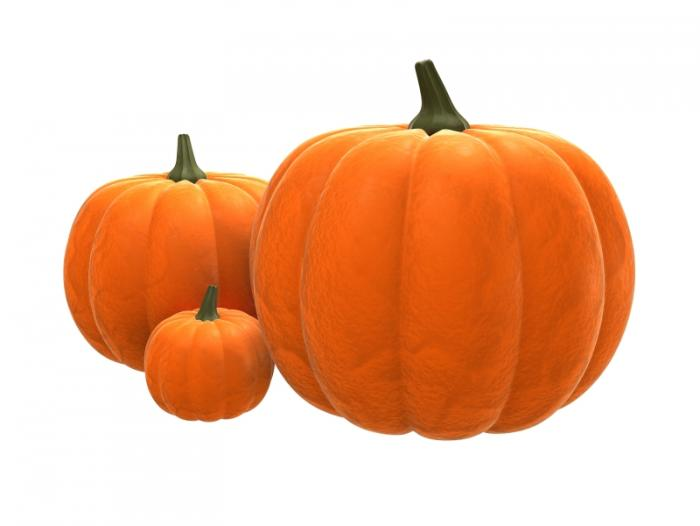 Pumpkin High Quality Background on Wallpapers Vista