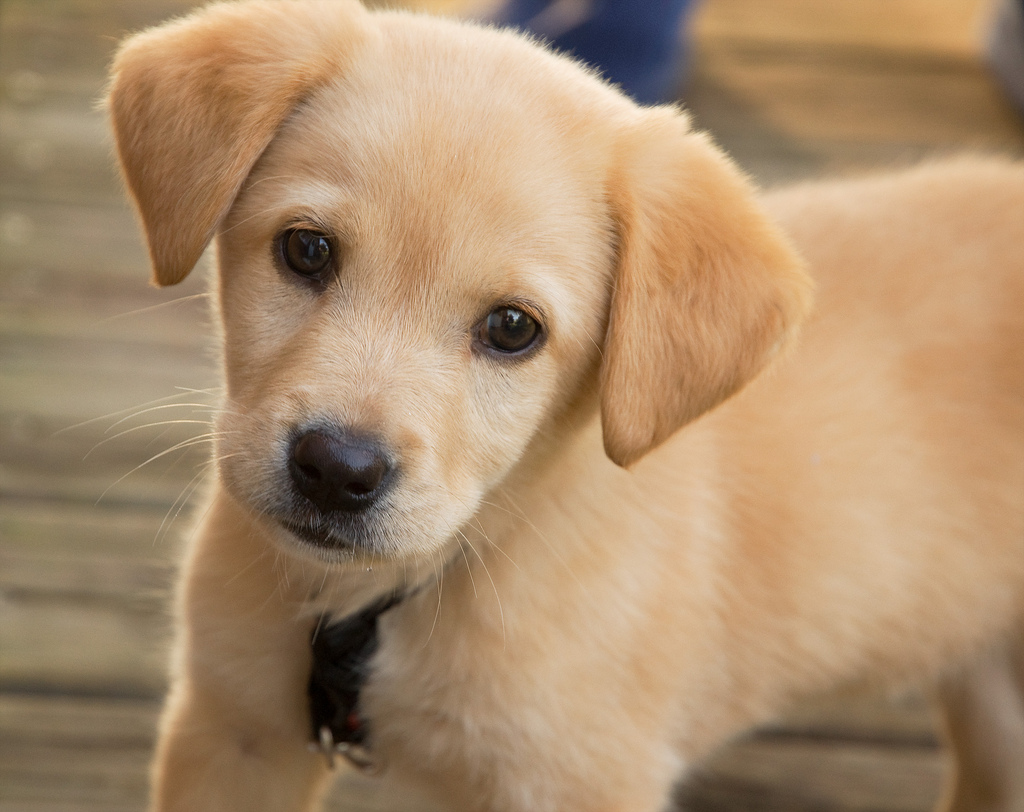 Nice wallpapers Puppy 1024x812px