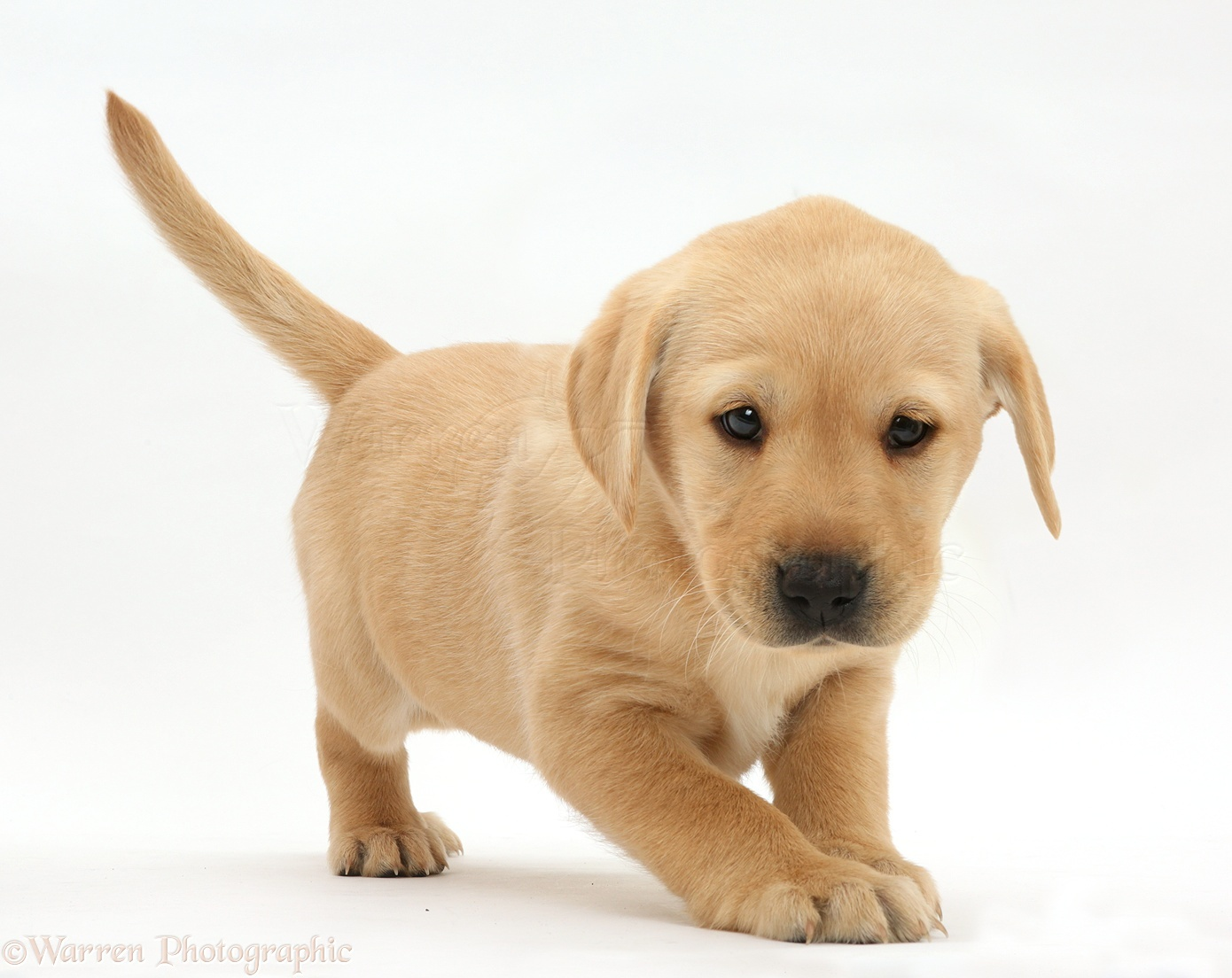 Amazing Puppy Pictures & Backgrounds