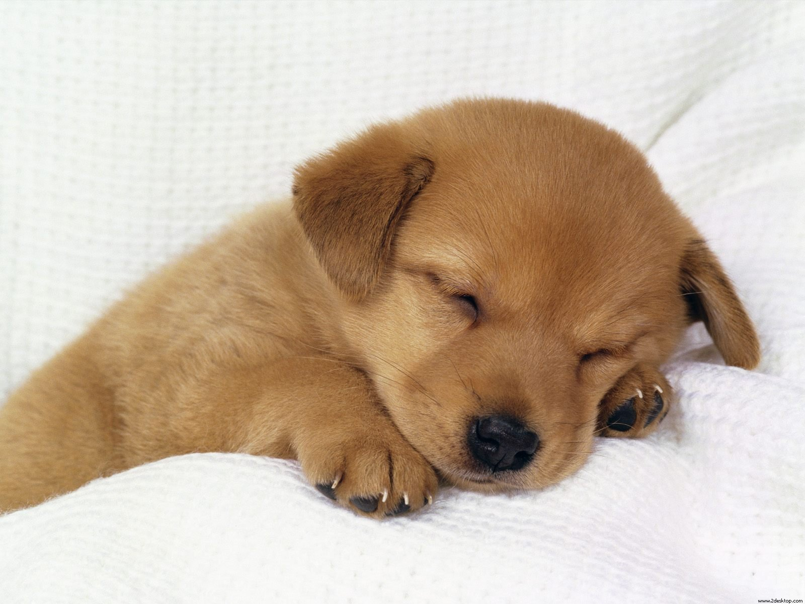 Puppy Backgrounds on Wallpapers Vista