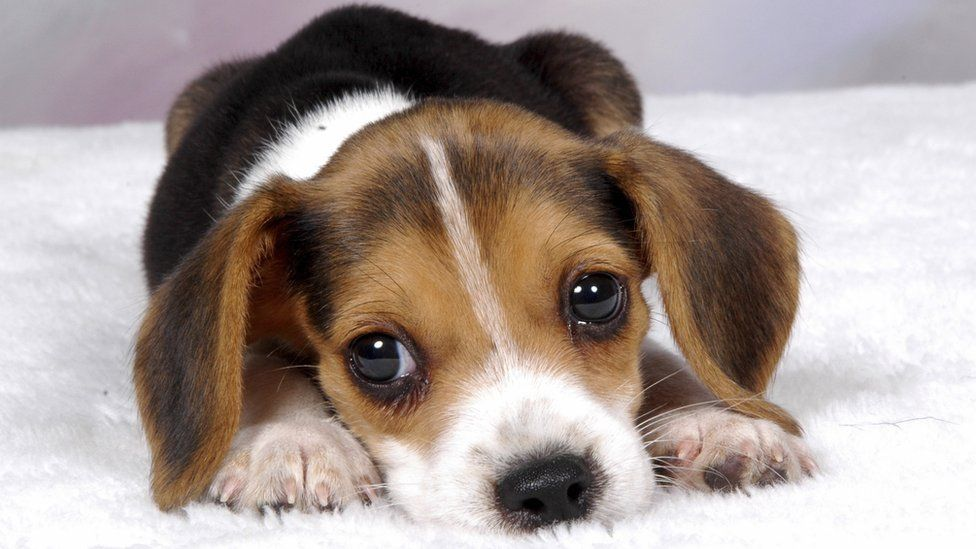 HQ Puppy Wallpapers | File 80.52Kb