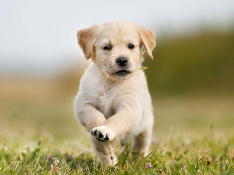 Puppy Backgrounds, Compatible - PC, Mobile, Gadgets| 800x600 px