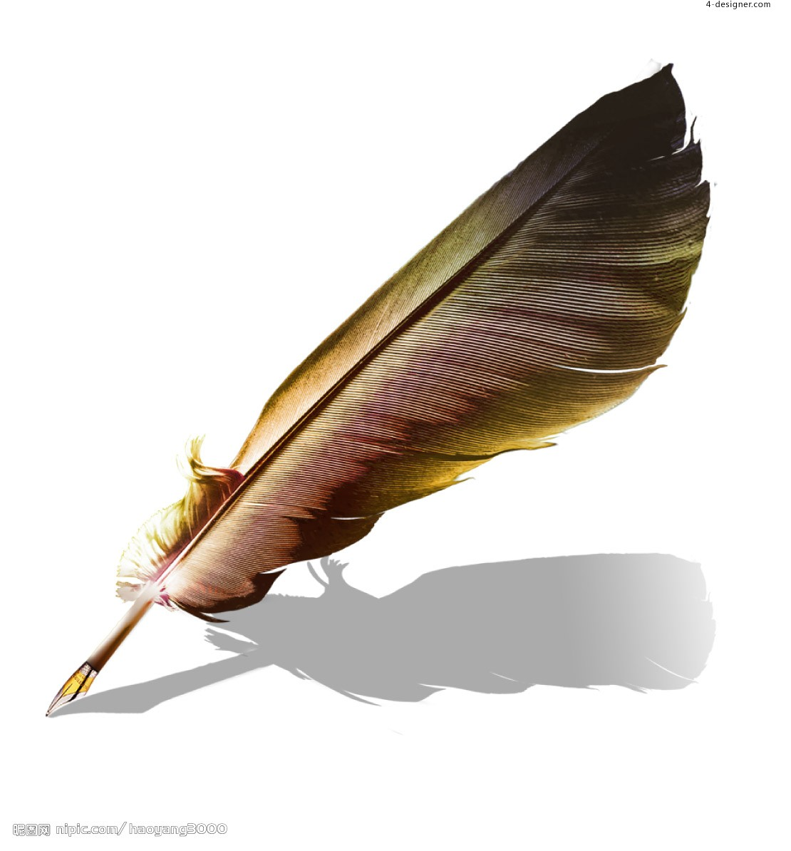 Amazing Quill Pictures & Backgrounds