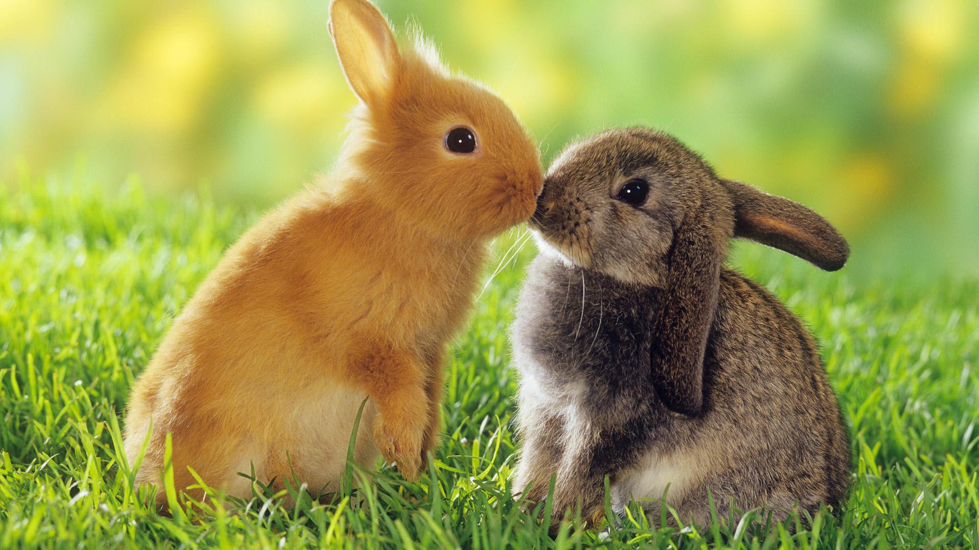 Nice Images Collection: Rabbit Desktop Wallpapers