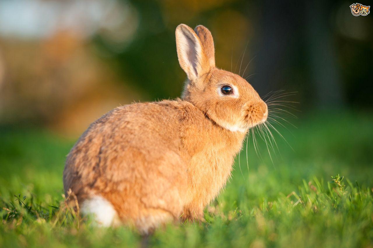 1280x852 > Rabbit Wallpapers