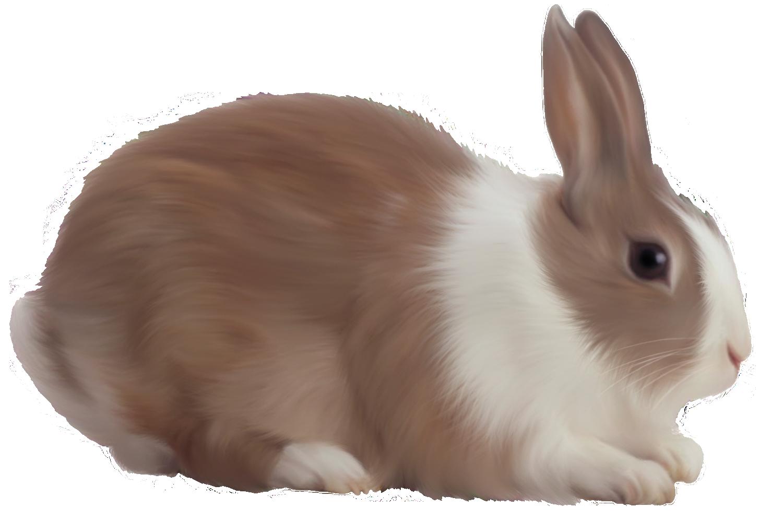 Rabbit Pics, Animal Collection