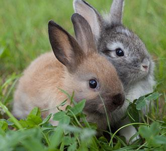 HQ Rabbit Wallpapers | File 26.86Kb
