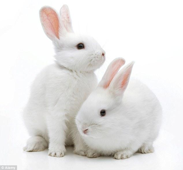 HD Quality Wallpaper | Collection: Animal, 634x587 Rabbit